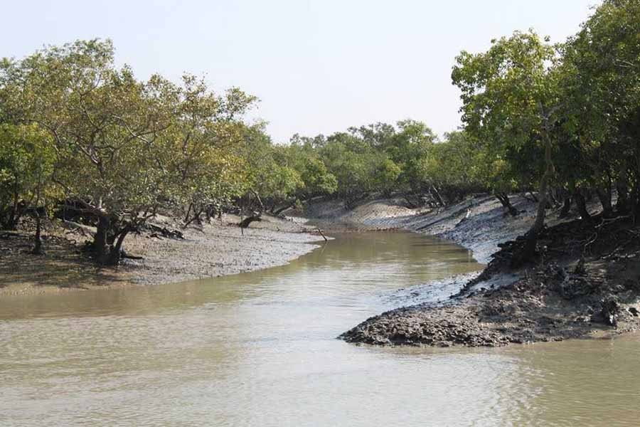 Save Sundarbans from the plunderers