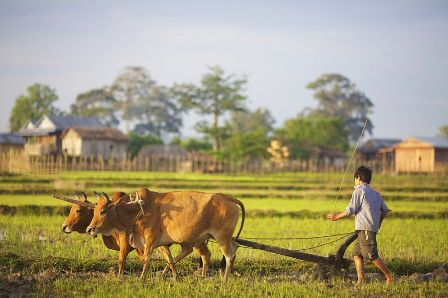 Driving forces behind small-farm transformation