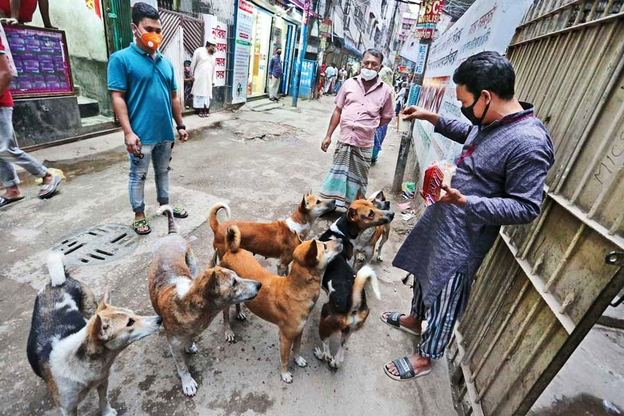 As dogs find food scarce as people are staying home, a man is seen feeding the animals at Shantibagh in the city on Friday — FE photo