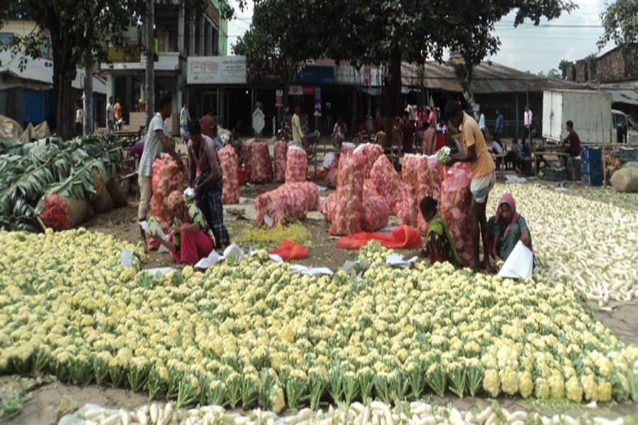Growers processing early winter cauliflowers to send those to Dhaka from Bogura district — FE Photo