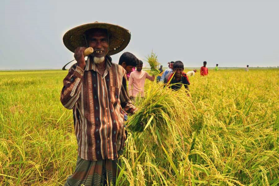 Sector-wide measures in agriculture for lasting food security