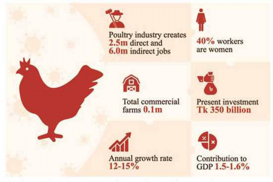 Poultry sector suffers as pandemic pushes up poverty