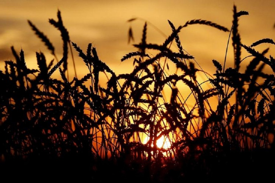 World food price index rises in January, at highest level since July 2014: FAO