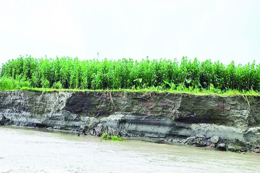 Photo shows the Teesta river engulfing a stretch of cropland in Sunderganj upazila of Gaibandha — FE Photo