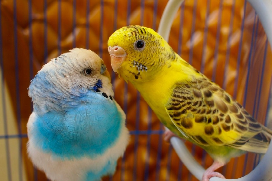 Befriending birds, the peaceful residents of nature