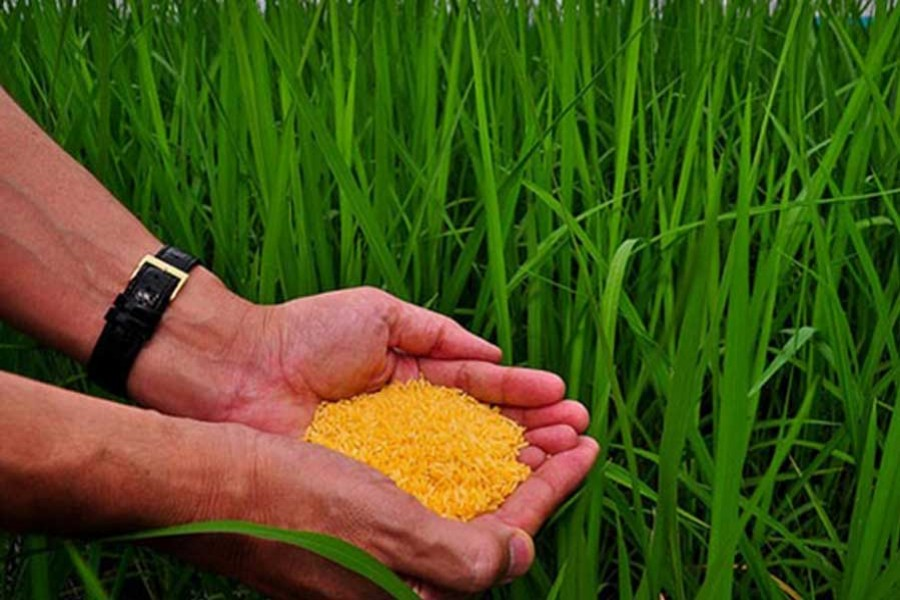 Philippines clears golden rice for commercial use, Bangladesh may approve soon