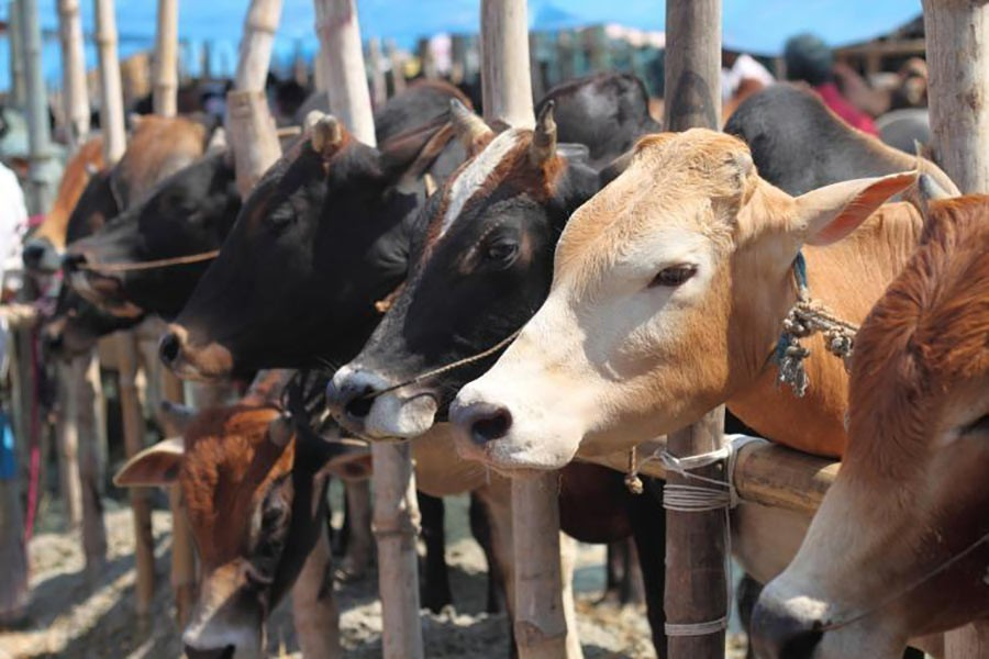 4.4pc of 9.1m sacrificed cattle sold online, says ministry