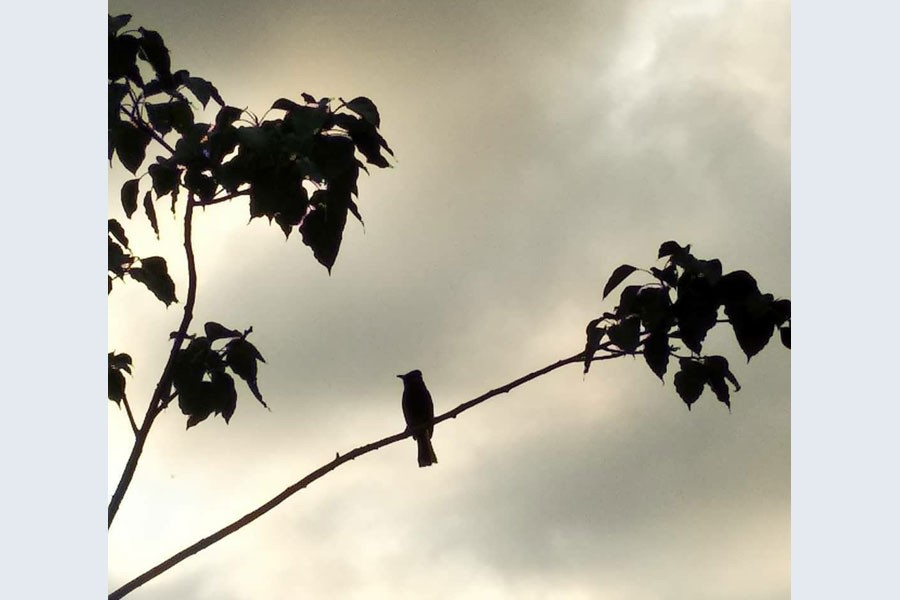 What is happening to the birds of Dhaka?