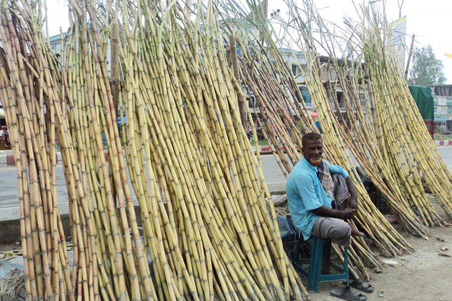 Bogra sees good sugarcane output this season