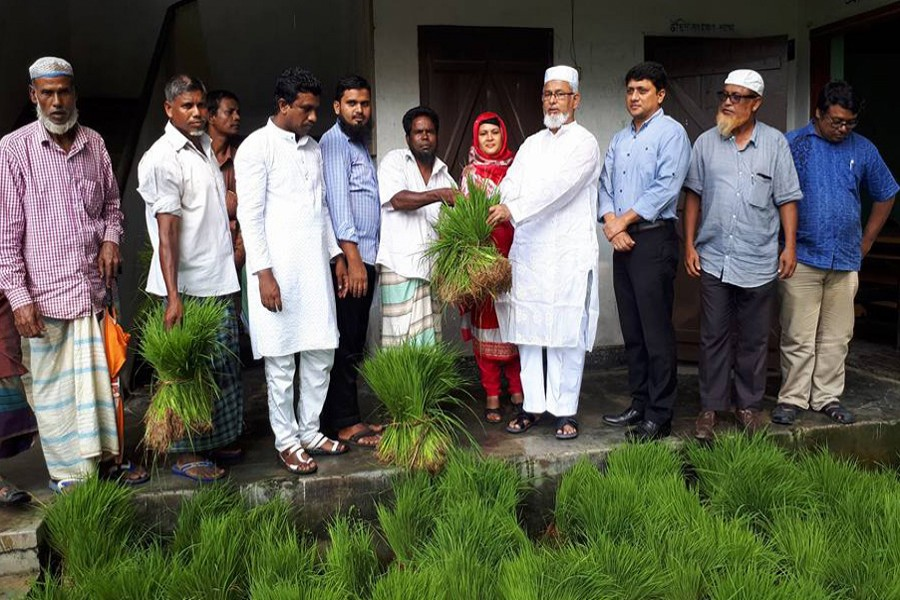 Sylhet cultivators face acute  shortage of T-Aman seedlings