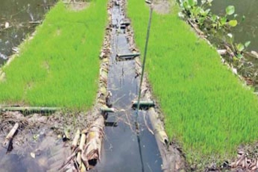 A floating seedbed in Sirajganj. The photo was taken on Saturday. — FE Photo