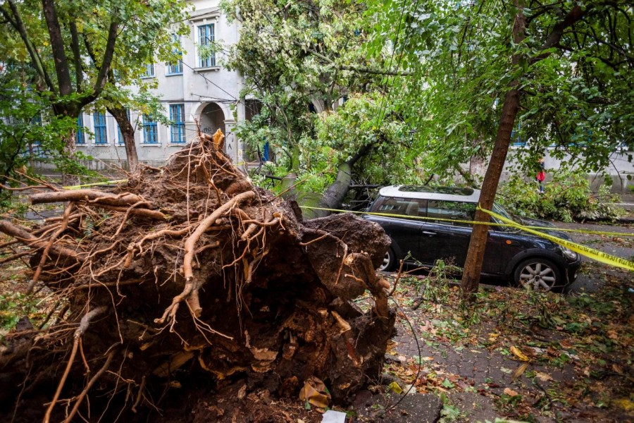 The area surrounding a fallen tree is cordoned off following a storm that tore through western Romania, in Timisoara, Romania on Sunday. - Reuters