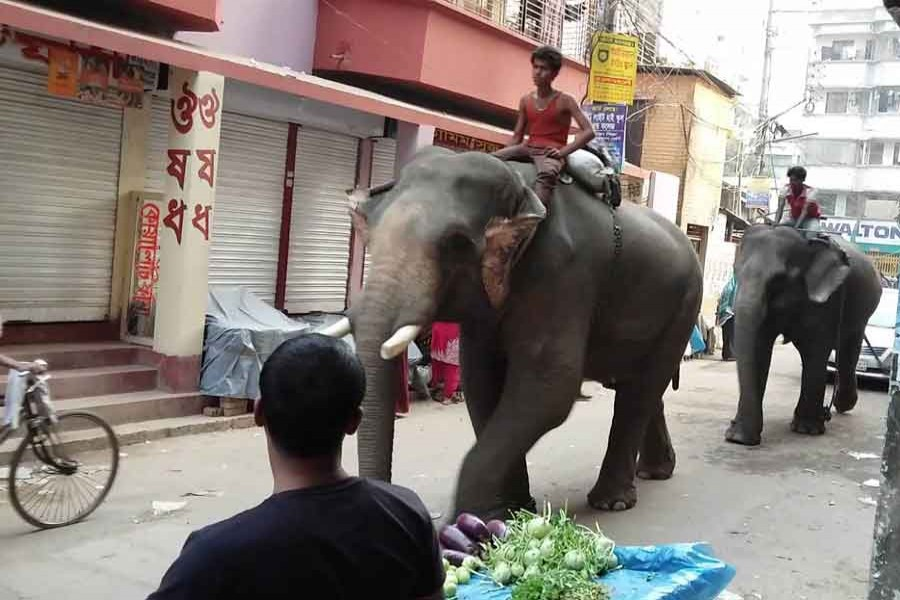 When elephants are used for extortion