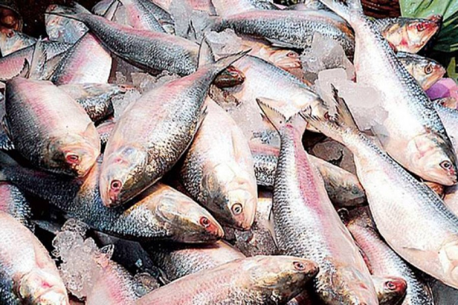 22-day Hilsa ban begins: Bangladesh contributes 65pc of total global output