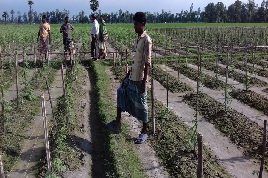 The farmers take care of a winter vegetable field in Kurigram. The photo was taken on Thursday. 	 	— FE Photo
