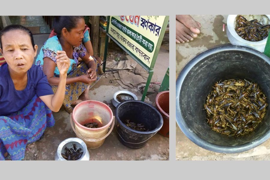 Selling insects as food at a Bandarban market