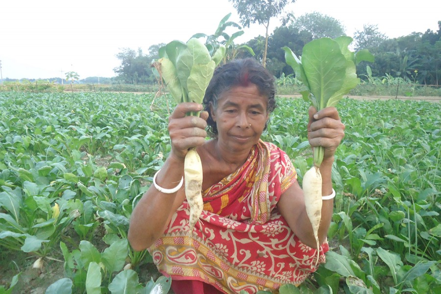 Phul Rani shows the radish grown in her vegetable field on Monday. — FE Photo