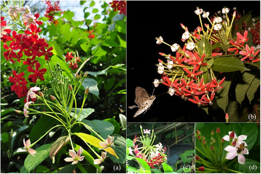 Pollinators use multiple cues to recognise flowers: Study