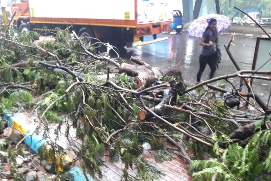 A collapsed tree blocks a footpath near Thane. Maharashtra entered a state of high alert to tackle the stormy weather. (Hindustantimes photo)