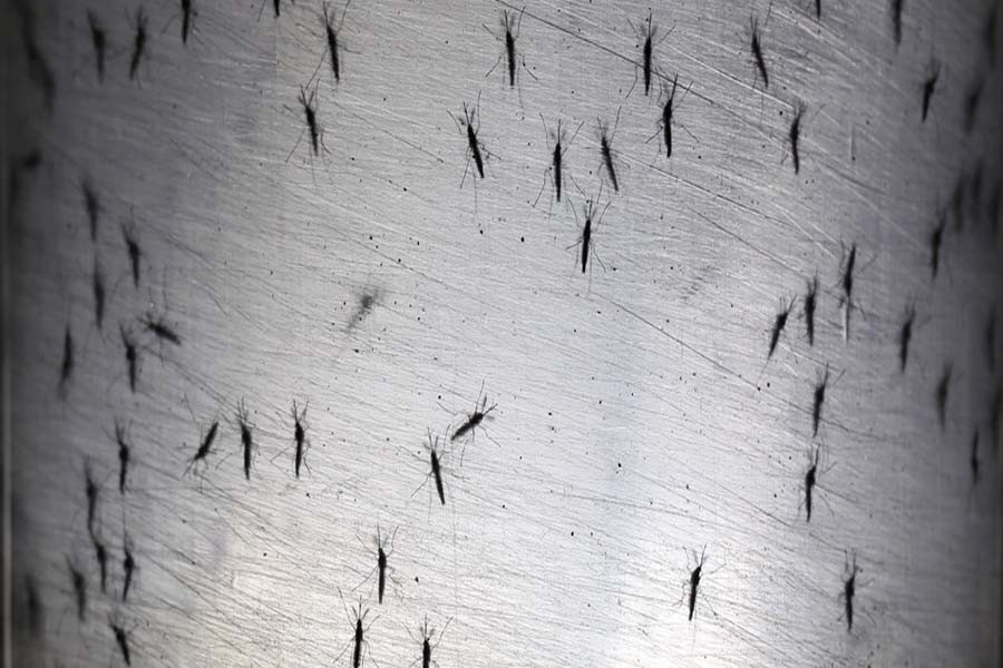 Winter and rising mosquito menace