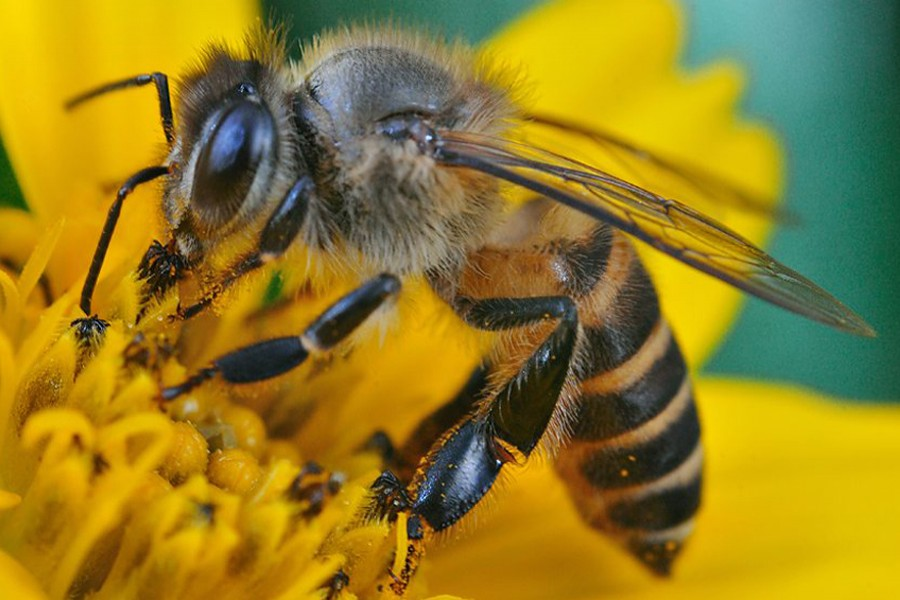 Countryspecific effects of neonicotinoid pesticides on