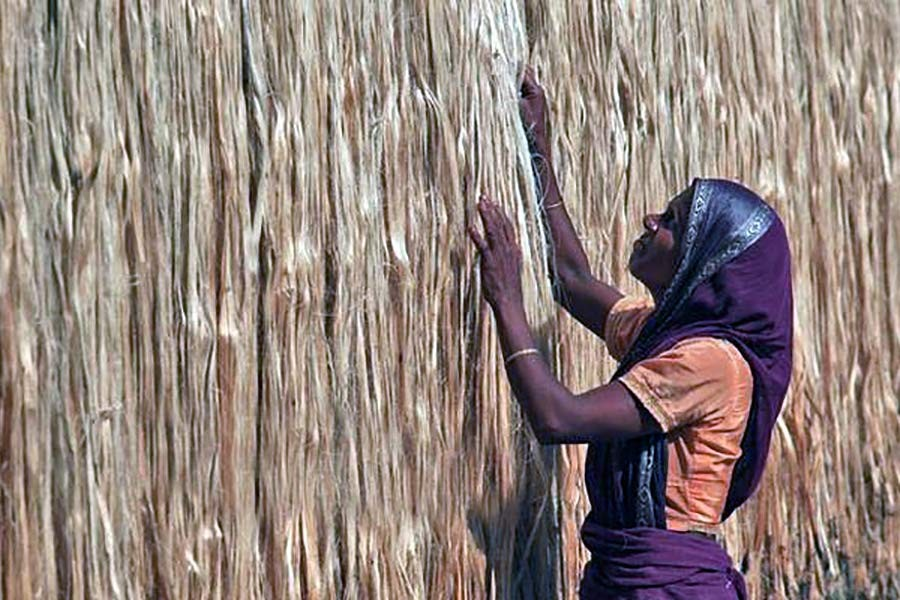 Jute production witnessed 8.0pc rise in 2017