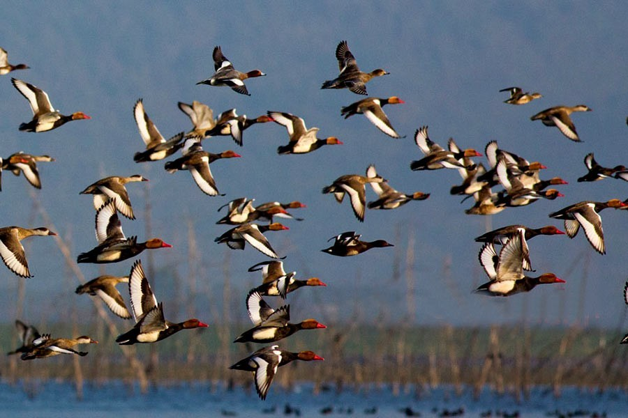 Climate change does not spare even migratory birds
