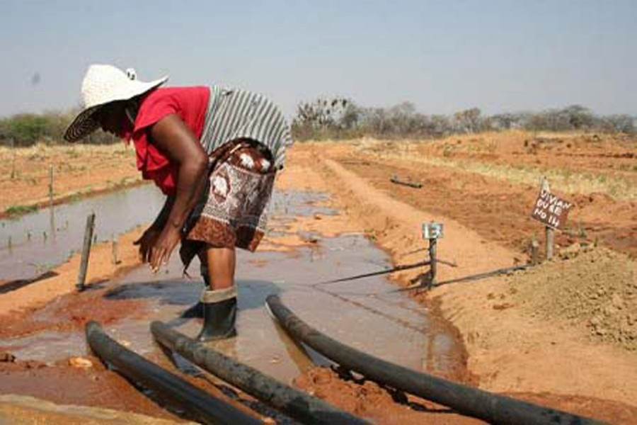 as climate change pummels agriculture irrigation offers the best