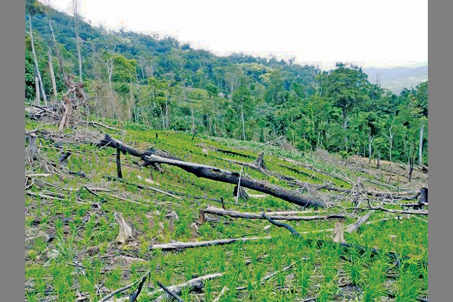 Deforestation, land degradation and global warming
