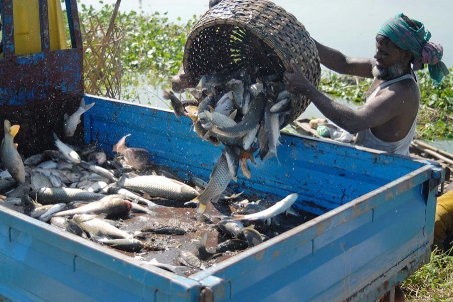 BD earned $514m by exporting fish in FY18: Minister