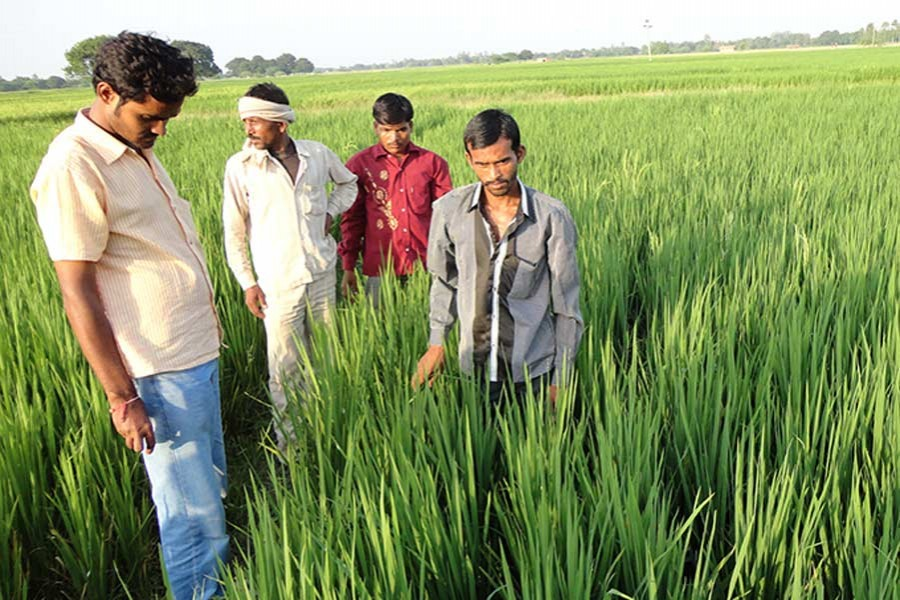 Changing gear for balanced agriculture