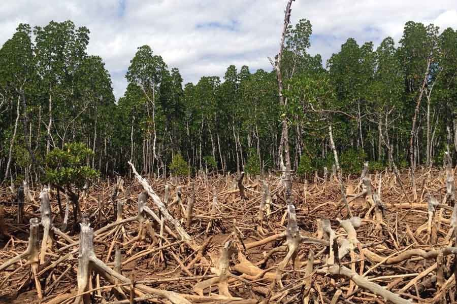 Paying the price for forest depletion