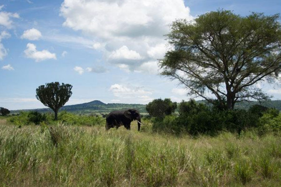 Queen Elizabeth National Park, one of Uganda's most popular safari destinations. An American woman and her Ugandan guide were kidnapped there Tuesday evening, Photo Credit - Michele Sibiloni