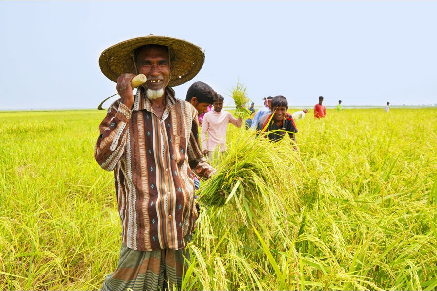 Giving paddy farmers their due share