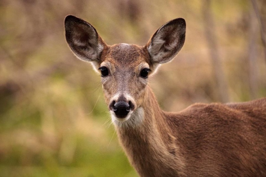 Chinese scientists map out deer's genomes
