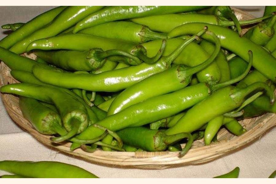 Bogura farmers reaping benefits of green chilli cultivation