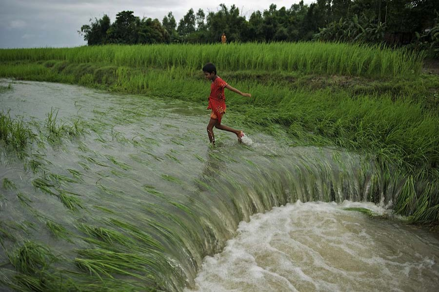 A paddy field is inundated after flooding at Astomir Char of Kurigram's Chilmari Upazila (Photo Courtesy: Unicef)