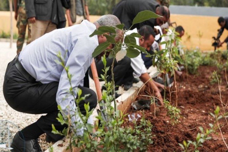 Ethiopia 'breaks' tree-planting record to combat climate change