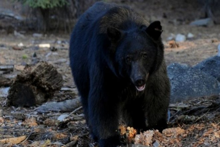 Bear breaks into house probably attracted by smell of rubbish