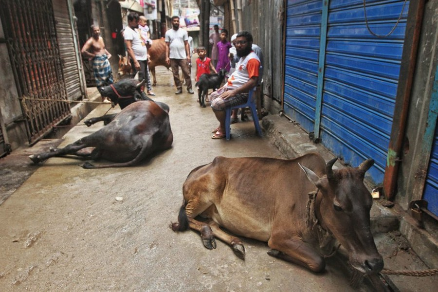 Haphazard Eid cattle slaughter continues this year