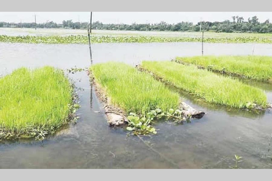 Floating seedbed for farmers