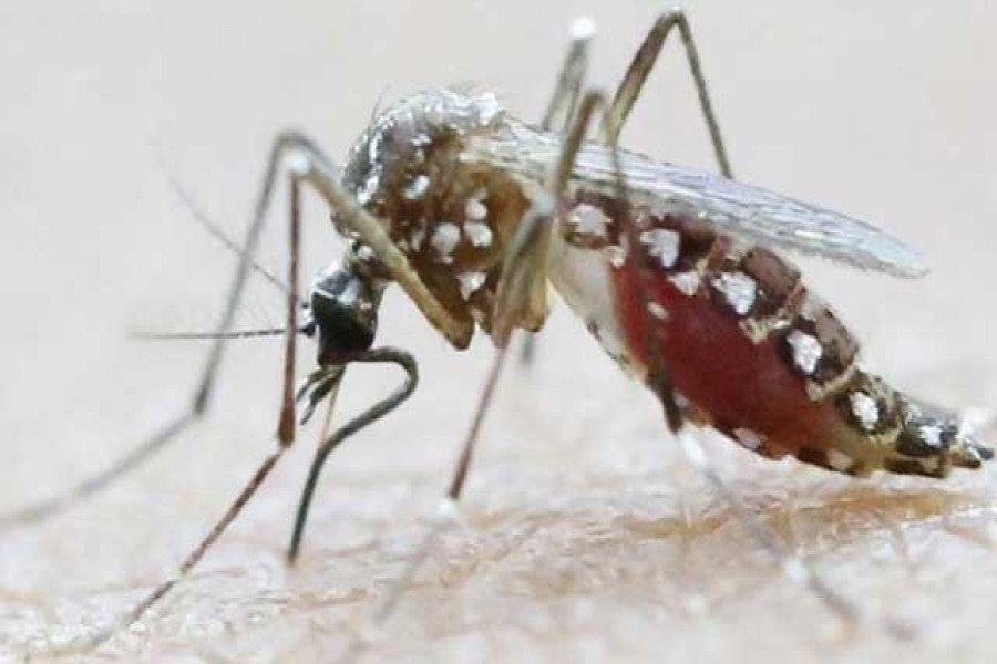 Experts arrive to help control Aedes breeding