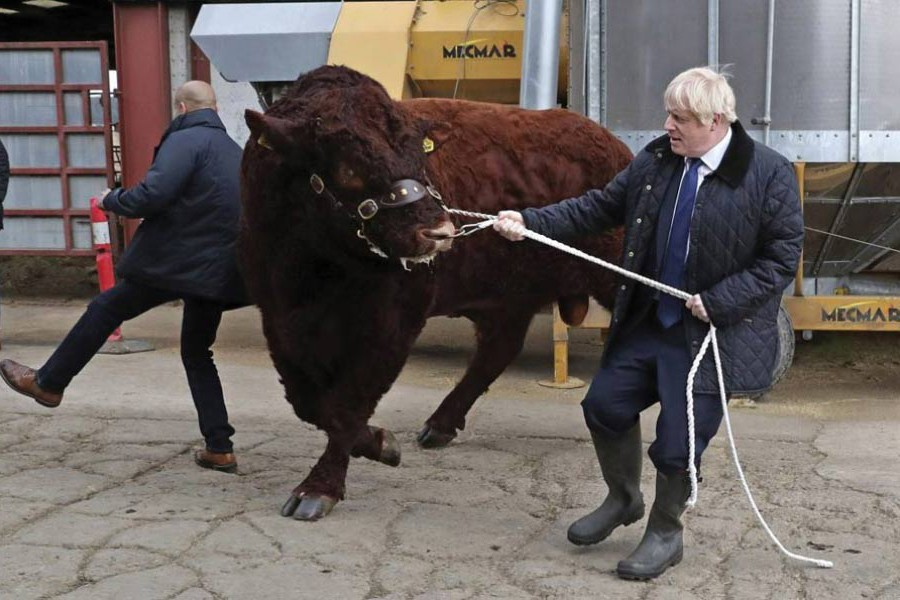 A bull bumps into a plainclothes police officer while being walked by British Prime Minister Boris Johnson during a visit to Darnford Farm in Banchory near Aberdeen, Scotland on September 06, 2019. Earlier in the day Boris Johnson made the Prime Minister's traditional September visit to the Queen at her Balmoral residency and presented the Benn-Burt or No-Deal Brexit bill for Royal Assent which was duly given on September 09. The Prime Minister is said to be contemplating ways and means to circumvent the law to achieve his goal of Brexit with or without any deal with the European Union by October 31.  —Photo: AP