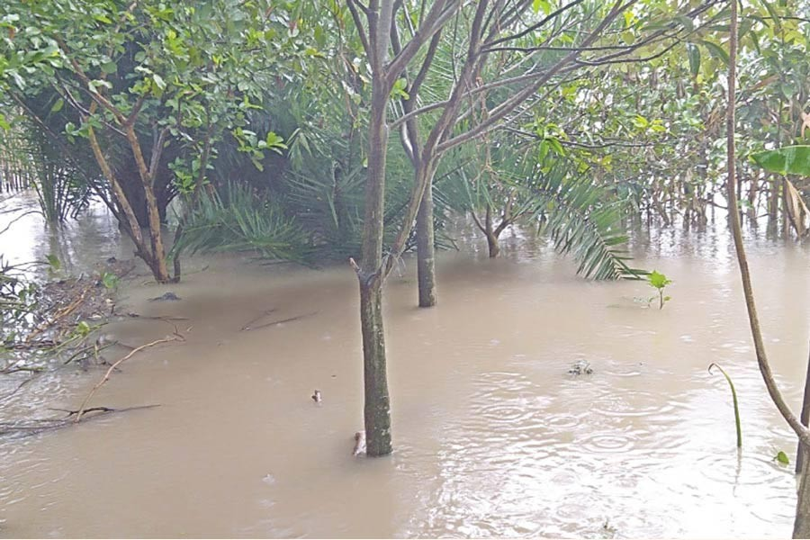 NATORE: A guava orchard in the Nawsara Sultanpur area under Lalpur upazila inundated with the floodwater   —  FE Photo