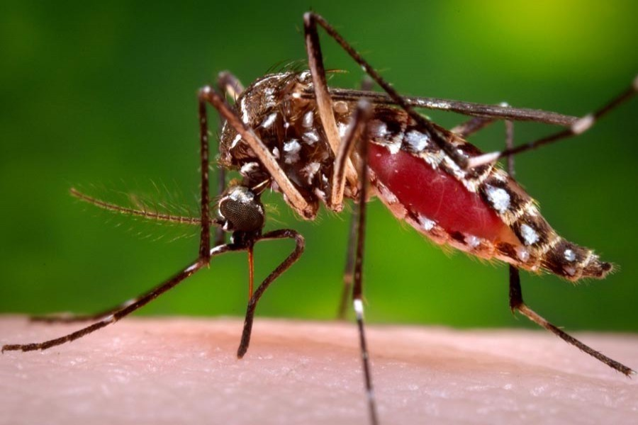 Another woman dies of dengue