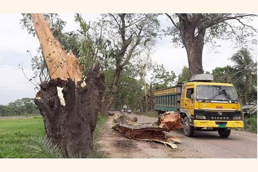 An old tree fell on the the Benapole-Jashore Highway recently   — FE Photo