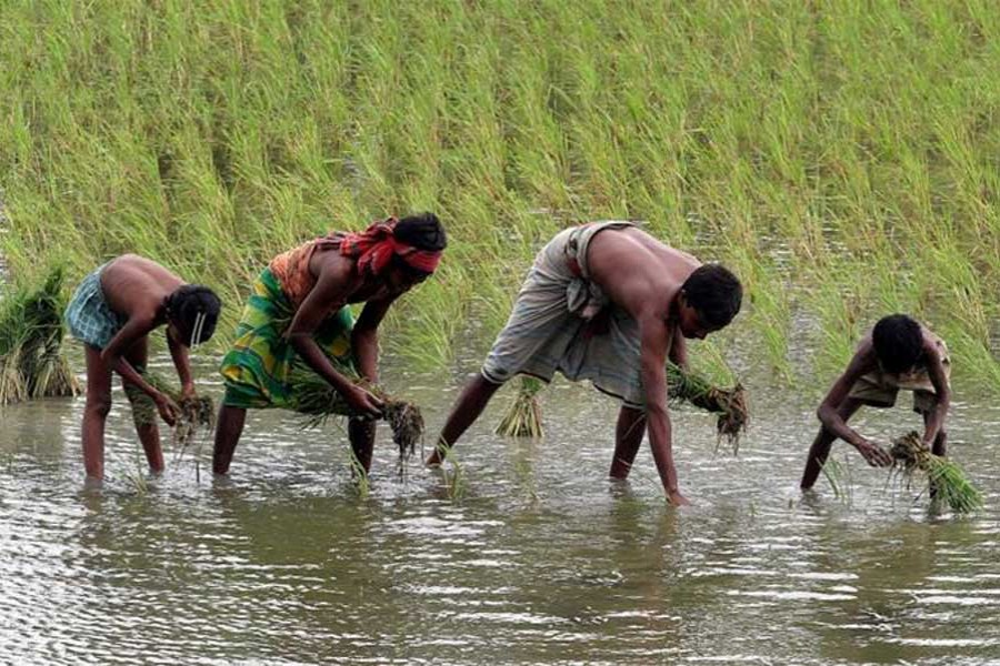 Asia-Pacific economies need to inject $42b into farming by 2030