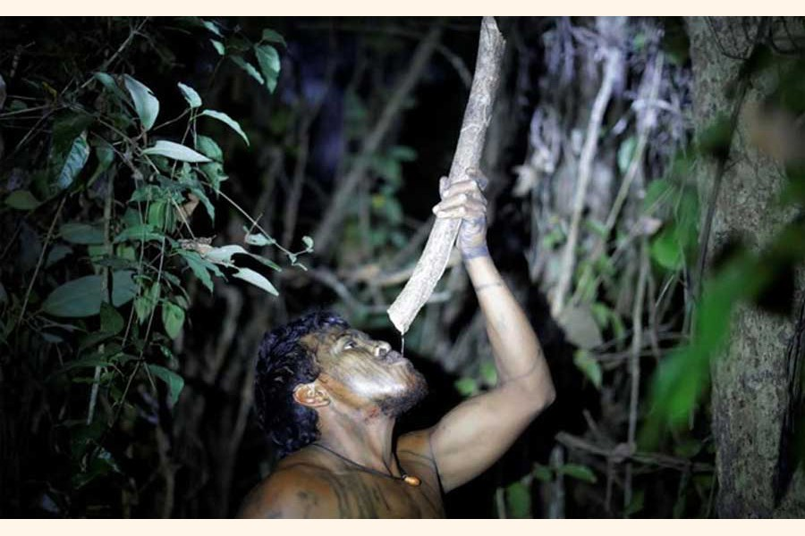 Indigenous leader Paulo Paulino Guajajara drinking water from a tree branch at a makeshift camp on Arariboia indigenous land 	— Reuters file