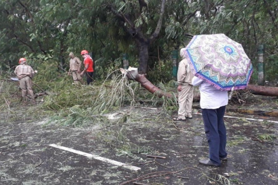 - NDRF personnel clearing the uprooted trees in Paradip