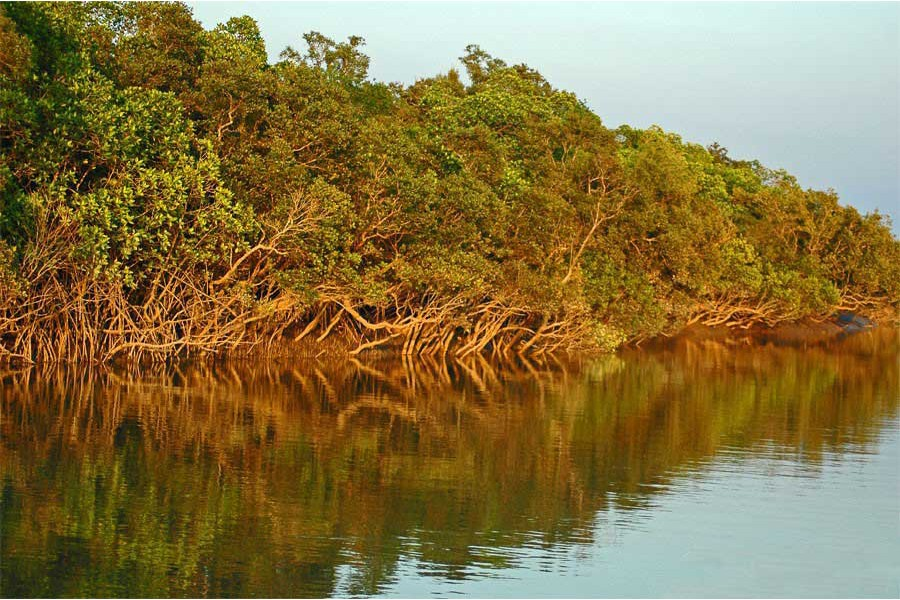 The Sunderbans turns out to be saviour